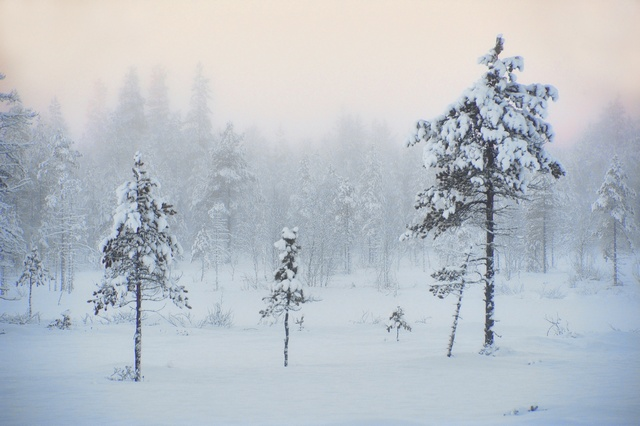 Finland winter photo