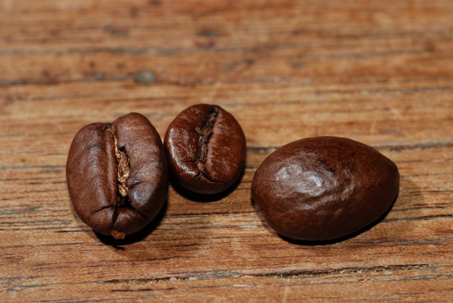 Coffea sp. photo