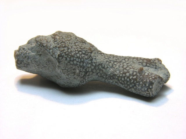 Pachypora photo