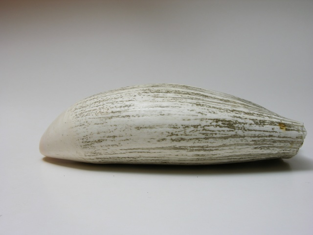Physeter macrocephalus photo